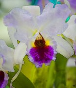 image 4651-orchid-jpg